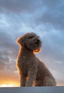 Midas during sunset